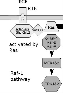 Rafpathway